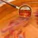 金魚絵師、深堀隆介の絵と思えない金魚の作品